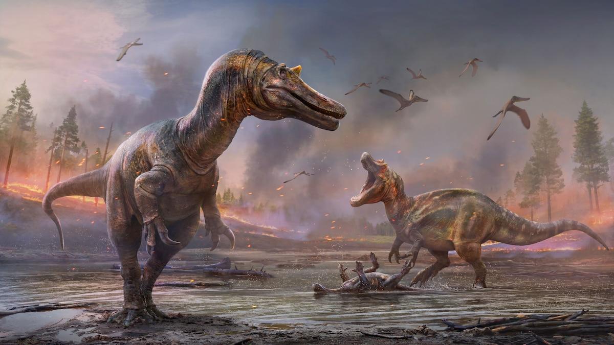 Fierce 'hell heron' dinosaur puts new wrinkles in Spinosaurus origin story