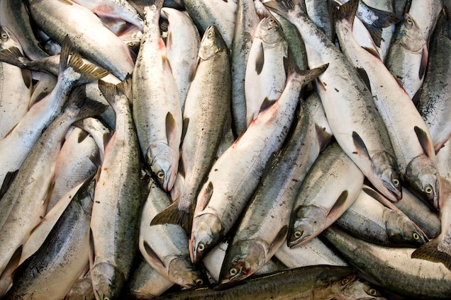 How Fishing Is Being Used to Support Food Security