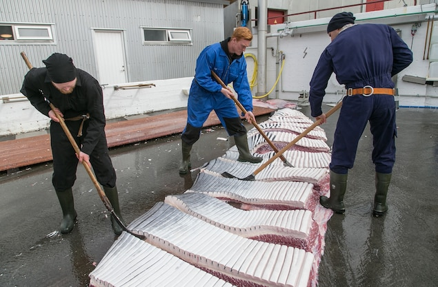 POLL: Should Norway's whaling program be stopped?