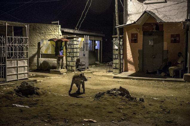 A hyena walks by police officers at night in Harar. Hyenas frequent the walled medieval city like domesticated dogs.