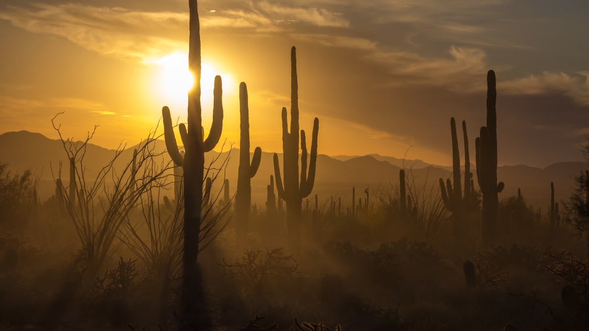 Saguaro National Park offers so much more than iconic cacti