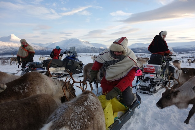 Sami herders tend to their reindeer in their winter grazing grounds in Troms County. Photograph by Scott Wallace